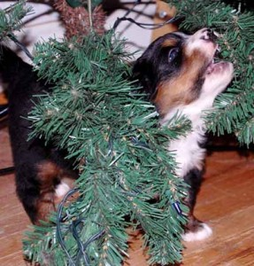 Puppy chewing on christmas tree light