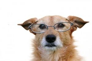 Dog wearing reading glasses
